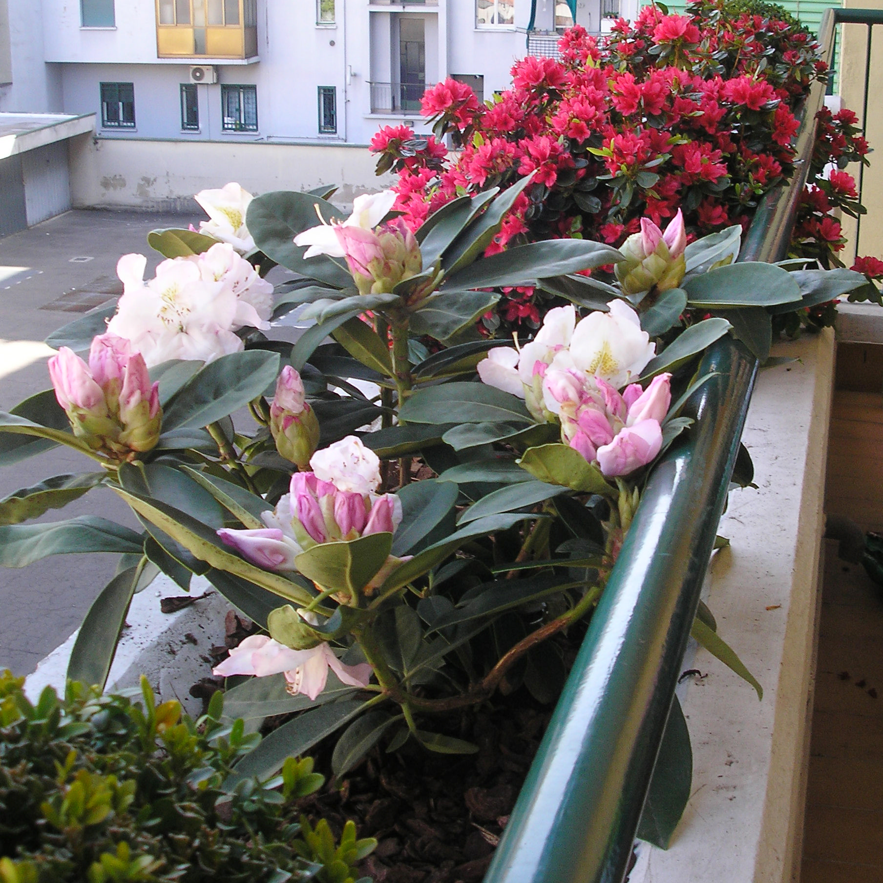 Best terrazzi fioriti progetti contemporary idee - Idee per terrazzi fioriti ...